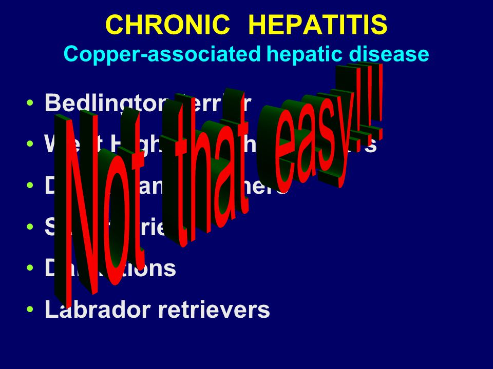 CHRONIC HEPATITIS Copper-associated hepatic disease Bedlington terrier West Highland white terriers Doberman pinschers Skye terrier Dalmations Labrado