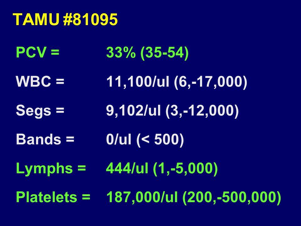 TAMU#81095 PCV =33% (35-54) WBC =11,100/ul (6,-17,000) Segs =9,102/ul (3,-12,000) Bands =0/ul (< 500) Lymphs =444/ul (1,-5,000) Platelets =187,000/ul (200,-500,000)