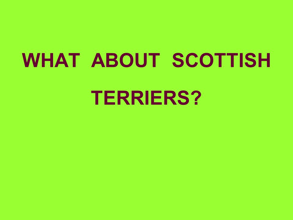 WHAT ABOUT SCOTTISH TERRIERS