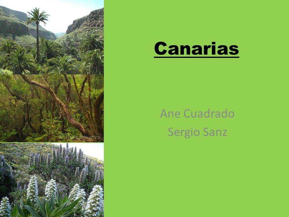 Canarias Ane Cuadrado Sergio Sanz