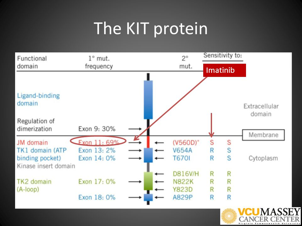The KIT protein Imatinib