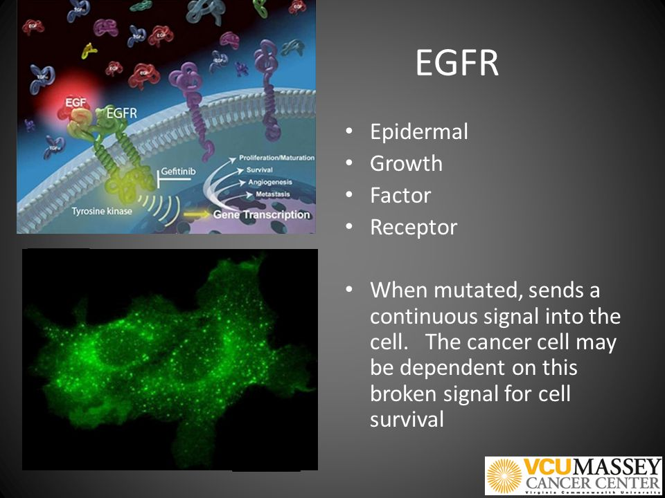 Targeting the mutant EGFR with erlotinib Erlotinib superior to chemotherapy in EGFR mutated lung cancer Chemotherapy superior to erlotinib in EGFR non-mutated (wildtype) cancer.