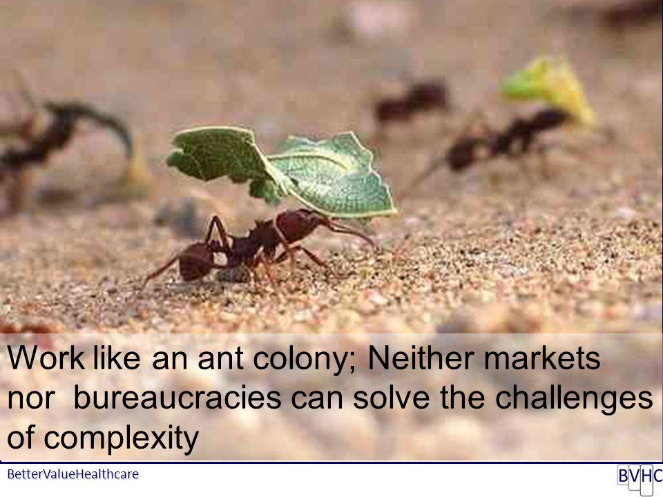 BetterValueHealthcare Map of Medicine - COPD Work like an ant colony; Neither markets nor bureaucracies can solve the challenges of complexity