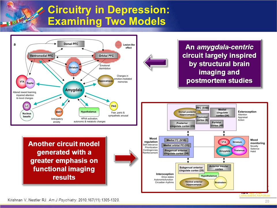 Circuitry in Depression: Examining Two Models An amygdala-centric circuit largely inspired by structural brain imaging and postmortem studies Another circuit model generated with a greater emphasis on functional imaging results Krishnan V, Nestler RJ.