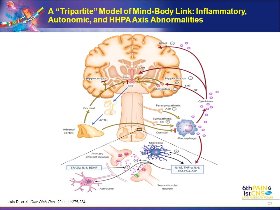 A Tripartite Model of Mind-Body Link: Inflammatory, Autonomic, and HHPA Axis Abnormalities Jain R, et al.