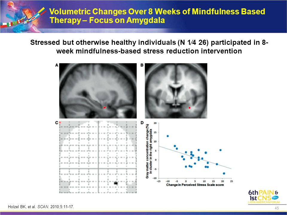 Volumetric Changes Over 8 Weeks of Mindfulness Based Therapy – Focus on Amygdala Stressed but otherwise healthy individuals (N 1⁄4 26) participated in 8- week mindfulness-based stress reduction intervention Holzel BK, et al.