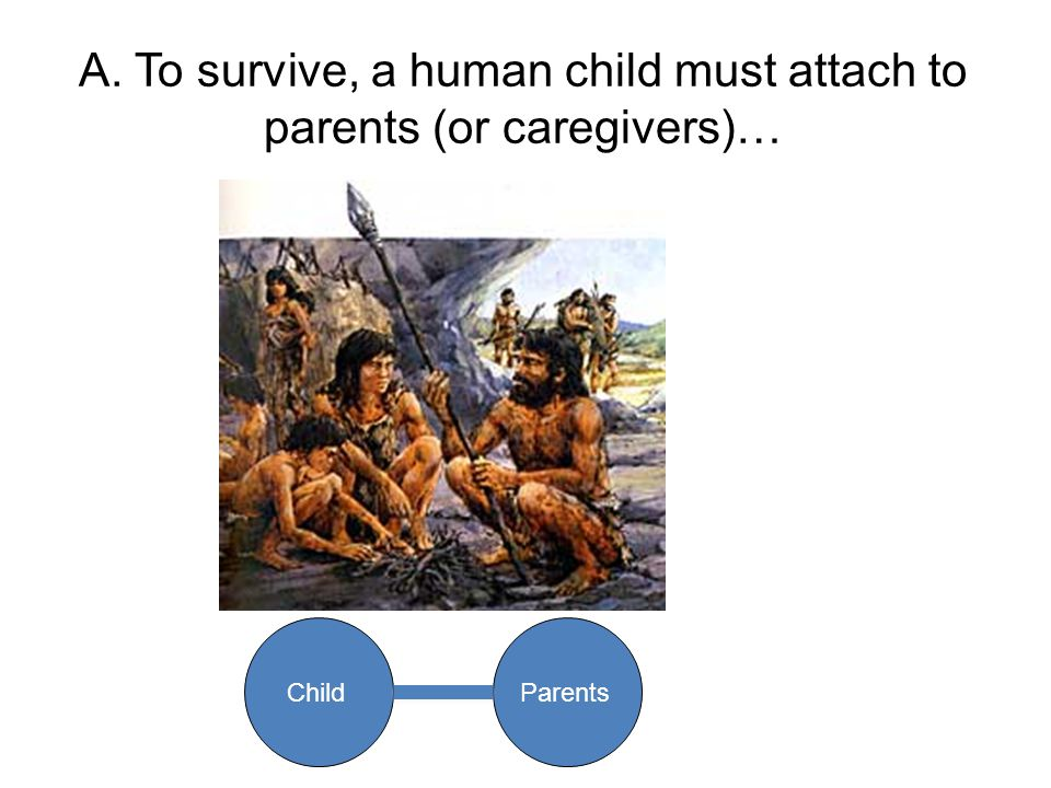 A. To survive, a human child must attach to parents (or caregivers)… ChildParents