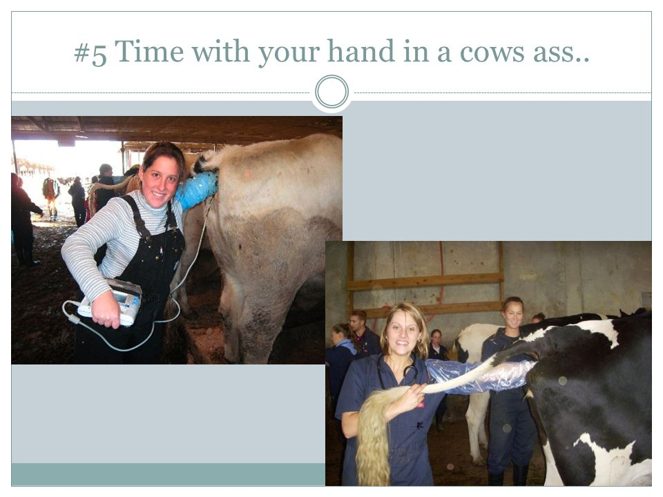 #5 Time with your hand in a cows ass..