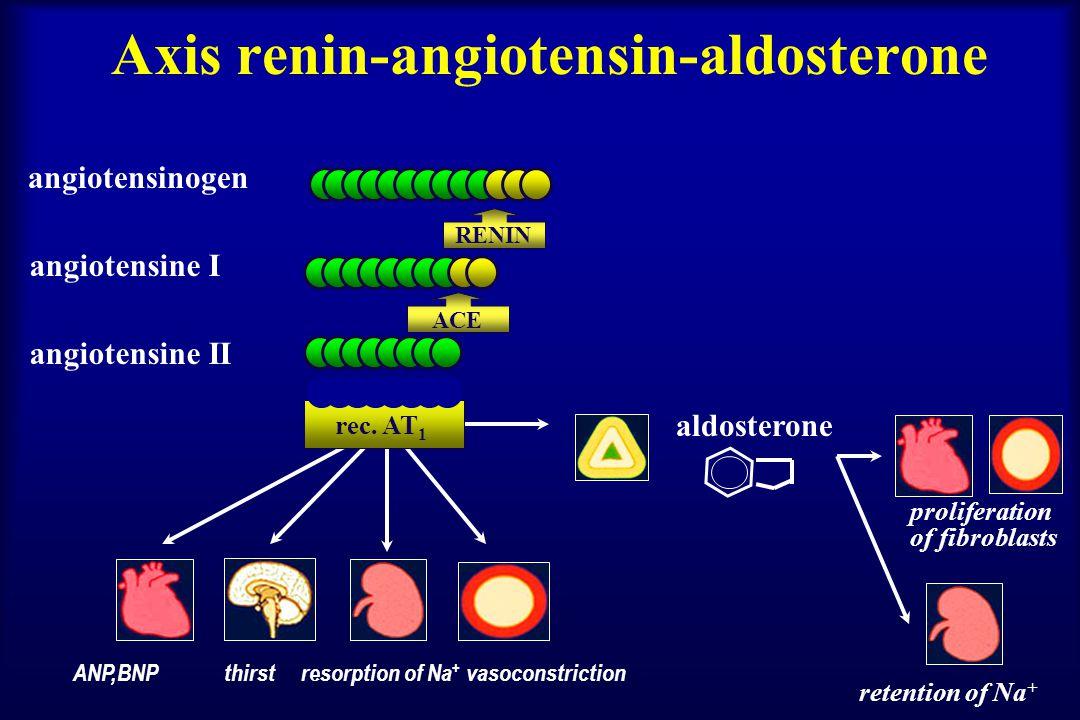 Axis renin-angiotensin-aldosterone angiotensinogen angiotensine I angiotensine II aldosterone ANP,BNP thirst resorption of Na + vasoconstriction RENIN rec.