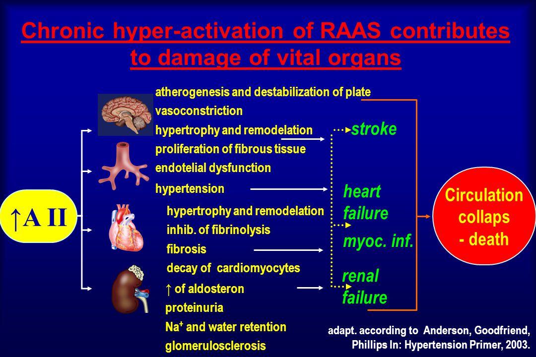 Activation of RAA system adrenergic receptors  1 osmotic receptors chemorecept.