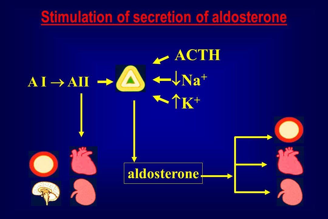 aldosterone K+K+  Na + ACTH A I  AII Stimulation of secretion of aldosterone
