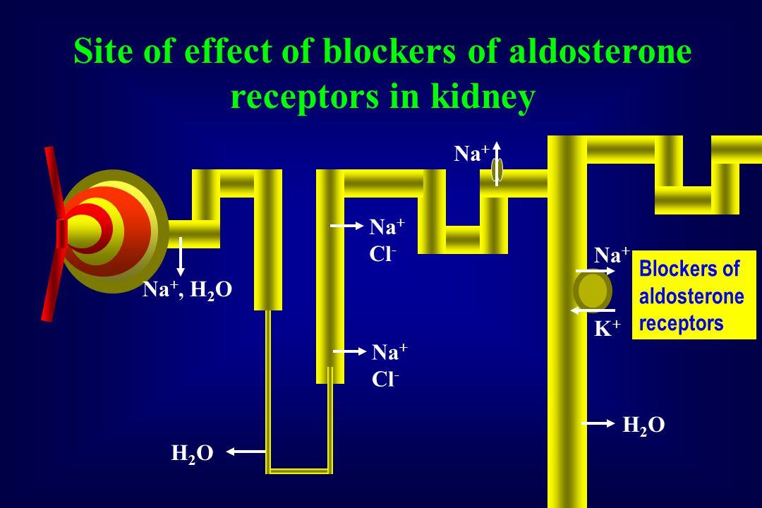 Na +, H 2 O H2OH2O Na + Cl - H2OH2O Na + K+K+ Blockers of aldosterone receptors Na + Cl - Site of effect of blockers of aldosterone receptors in kidney