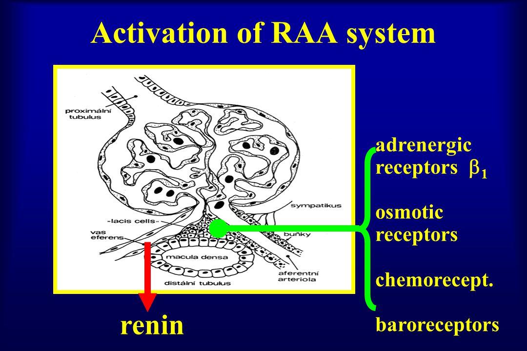 angiotensinogen angiotensin I angiotensin II ACE AT1 rec.