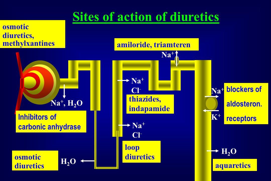 Na +, H 2 O H2OH2O Na + Cl - H2OH2O Na + K+K+ Inhibitors of carbonic anhydrase osmotic diuretics aquaretics blockers of aldosteron.