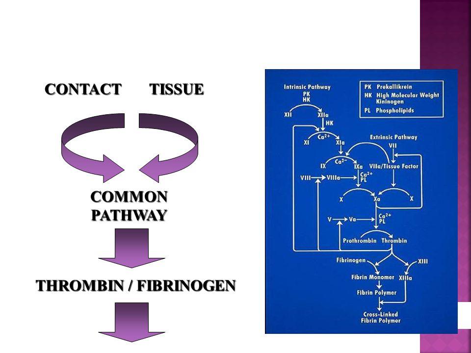 CONTACT TISSUE COMMON PATHWAY THROMBIN / FIBRINOGEN