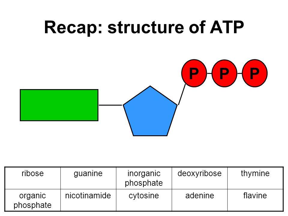 Recap: structure of ATP P P P riboseguanineinorganic phosphate deoxyribosethymine organic phosphate nicotinamidecytosineadenineflavine