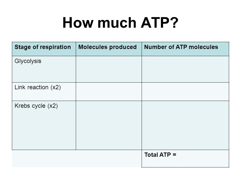 How much ATP.