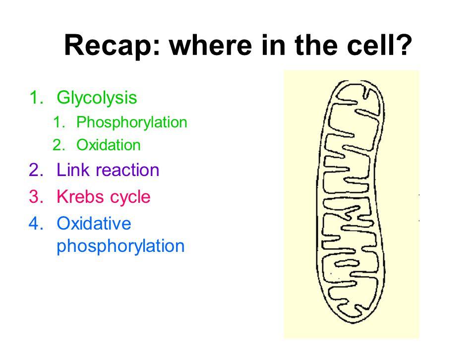 Recap: glycolysis