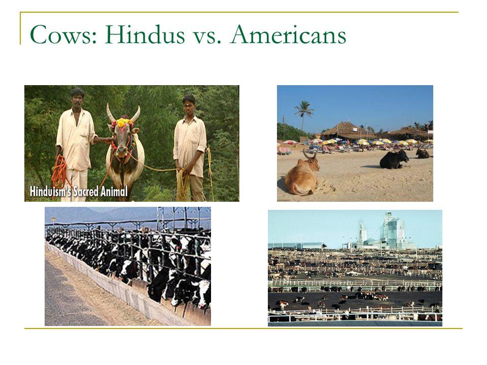 Cows: Hindus vs. Americans
