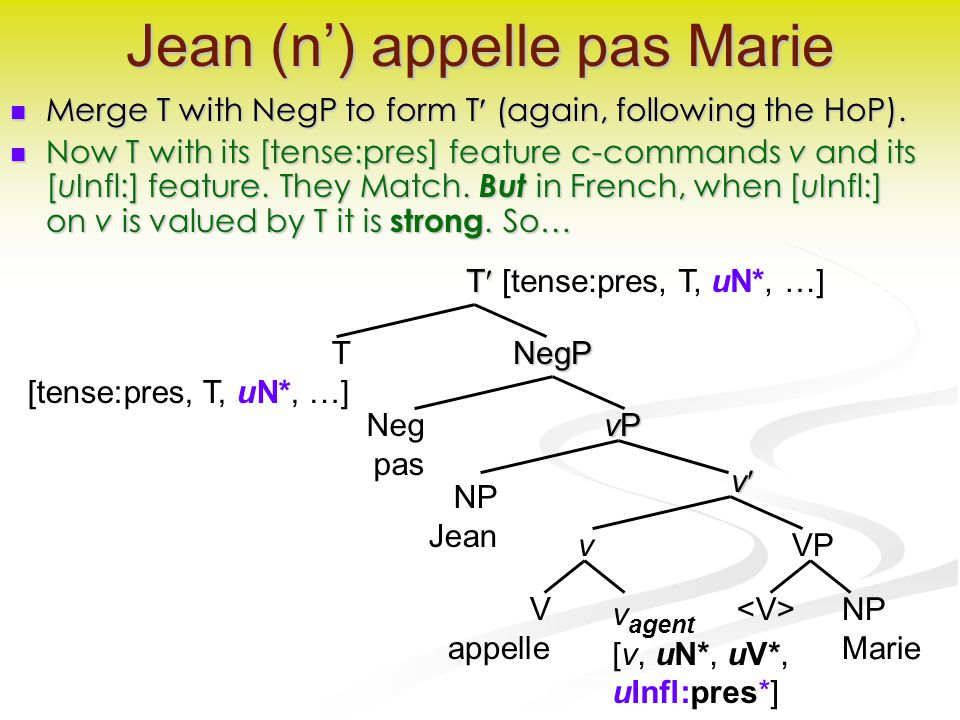 v Jean (n') appelle pas Marie Merge T with NegP to form T (again, following the HoP).
