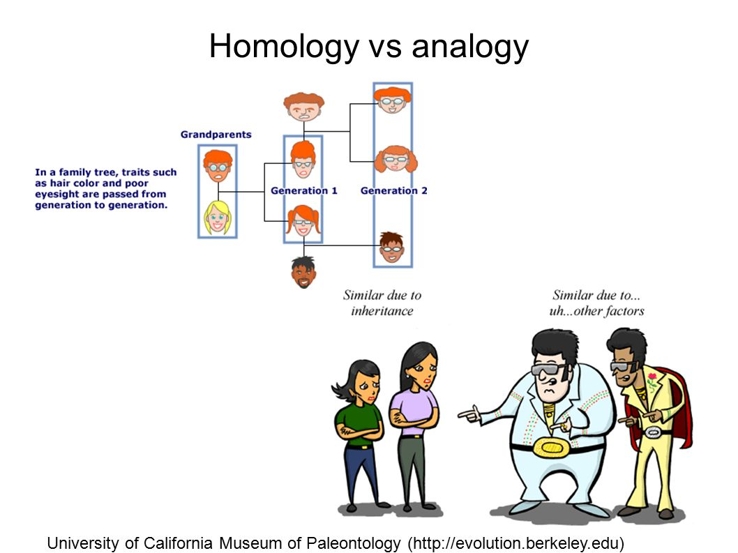 Homology vs analogy University of California Museum of Paleontology (http://evolution.berkeley.edu)