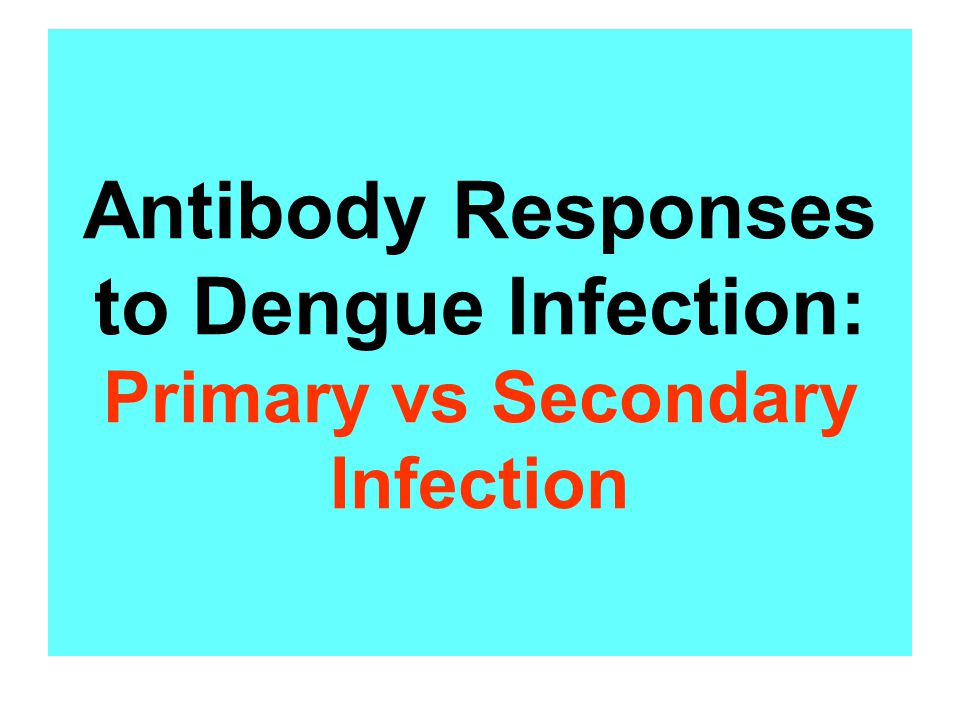 Antibody Responses to Dengue Infection: Primary vs Secondary Infection