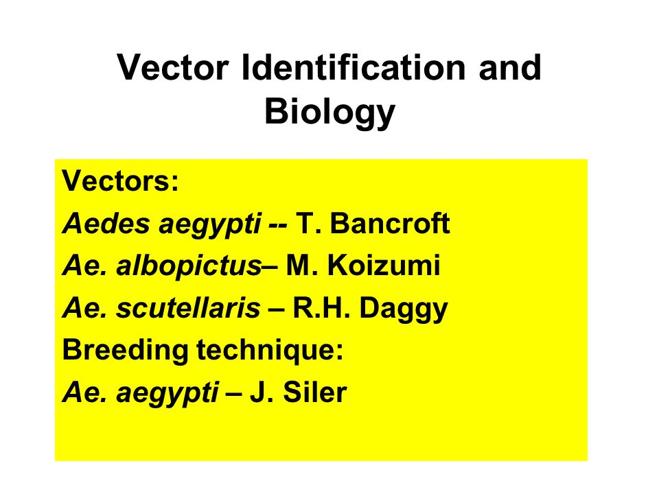 Vector Identification and Biology Vectors: Aedes aegypti -- T.
