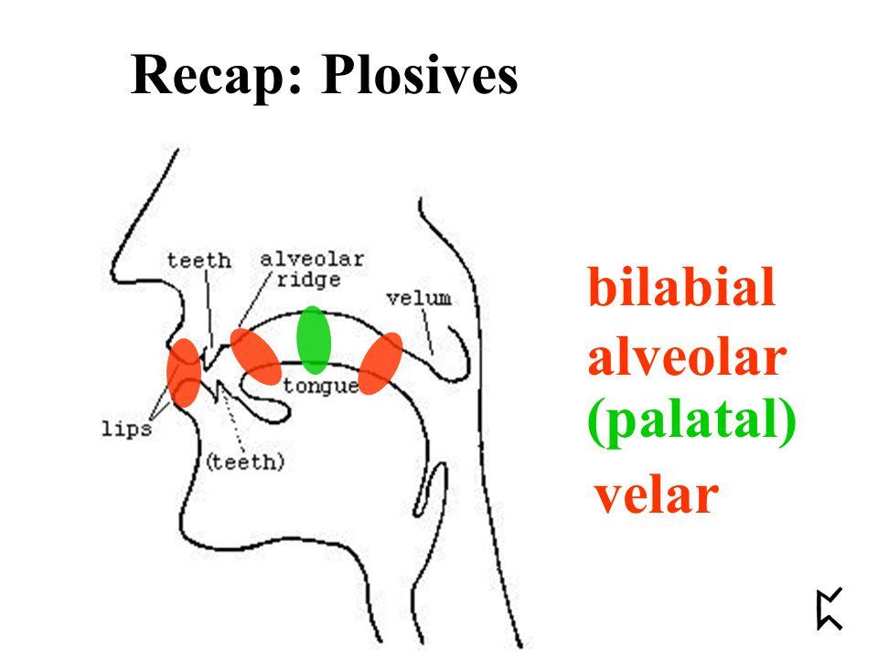 bilabial alveolar velar (palatal) Recap: Plosives