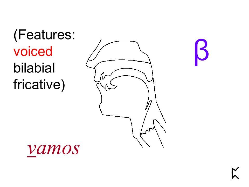 (Features: voiced bilabial fricative) vamos
