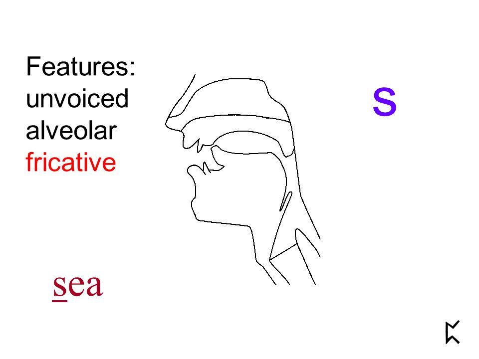Features: unvoiced alveolar fricative s sea
