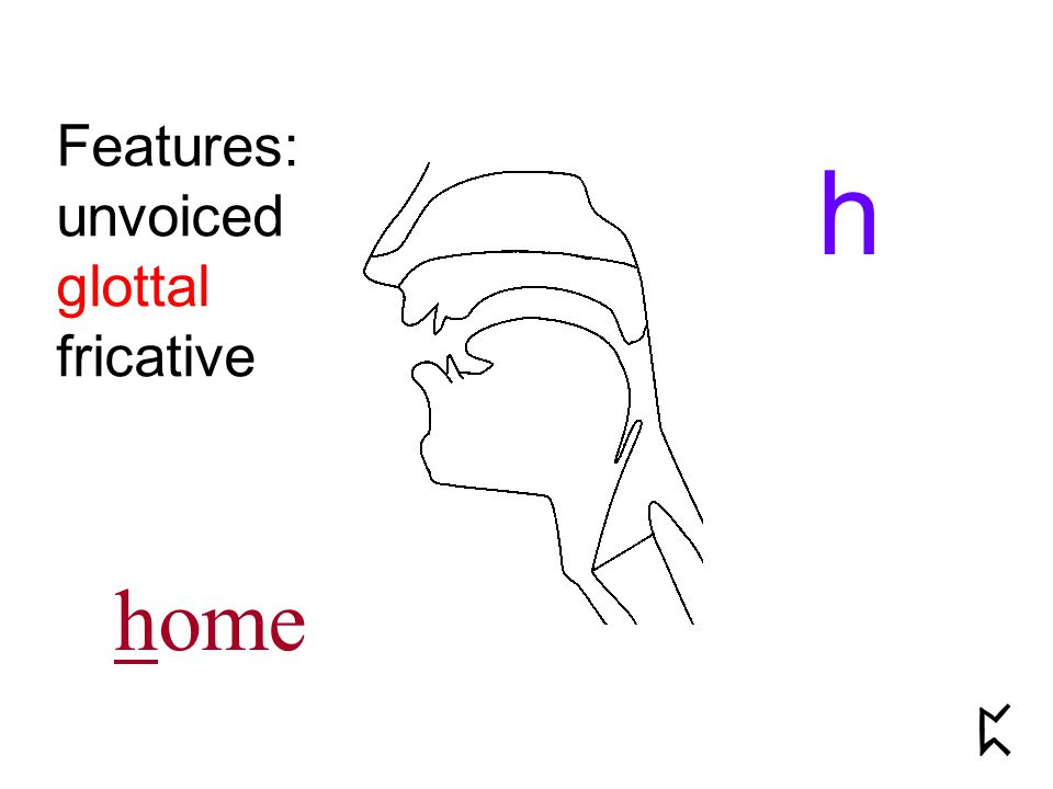 Features: unvoiced glottal fricative h home