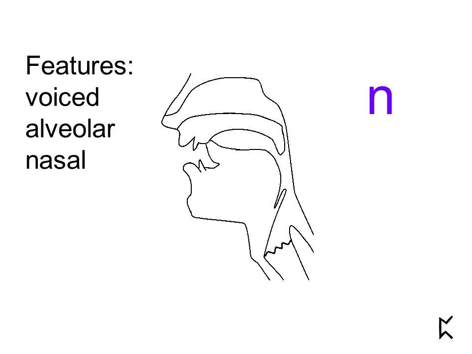 Features: voiced alveolar nasal n