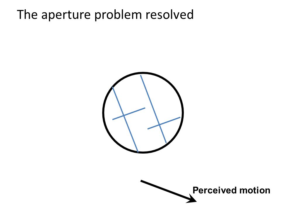 The aperture problem resolved Perceived motion