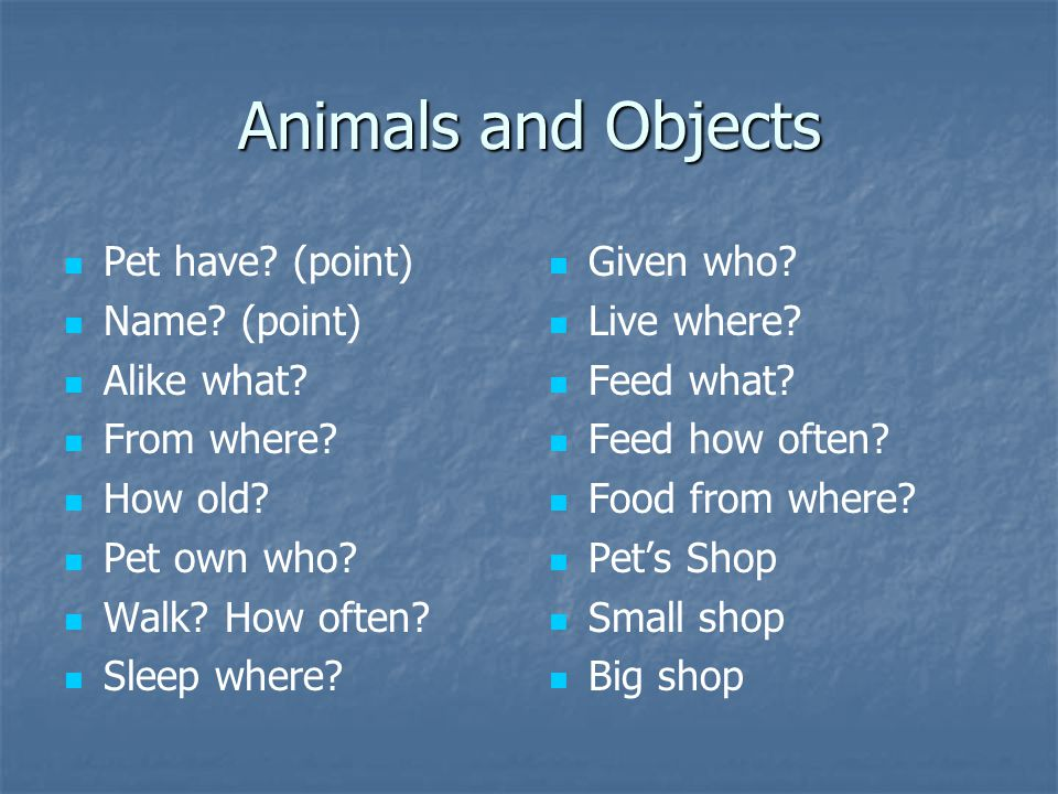 Animals and Objects Pet have? (point) Name? (point) Alike what? From where? How old? Pet own who? Walk? How often? Sleep where? Given who? Live where?