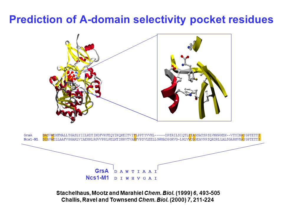 Prediction of A-domain selectivity pocket residues GrsA DASVWEMFMALLTGASLYIILKDTINDFVKFEQYINQKEITVITLPPTYVVHL-----DPERILSIQTLITAGSATSPSLVNKWKEK--VTYINAYGPTETTI Ncs1-M1 DIAVWELLAAFVGGARLVIAEHRLRGVVPHLPELMTDHRVTVAHFVPSVLEELLGWMADGGRVG-LRLVVCGGEAVPPSQRDRLLALSGARMVHAYGPTETTI GrsA D A W T I A A I Ncs1-M1 D I W H V G A I Stachelhaus, Mootz and Marahiel Chem.