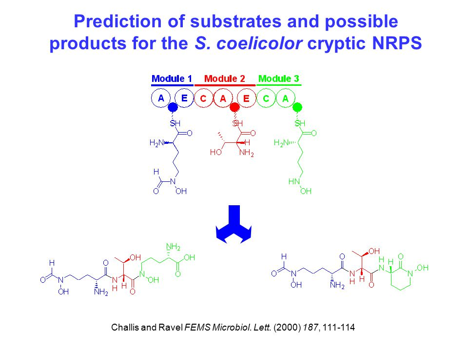 Prediction of substrates and possible products for the S.