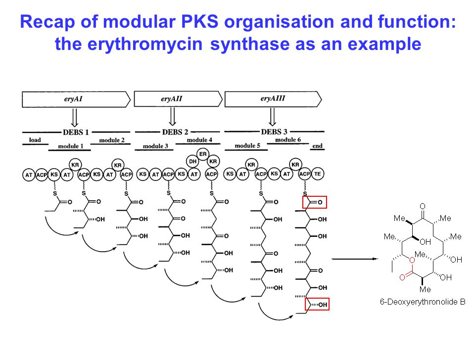 Three large modular enzymes (DEBS 1- 3), encoded by eryAI, eryAII, and eryAIII, assemble 6-DEB Each module performs one chain extension Recap of modular PKS organisation and function: the erythromycin synthase as an example