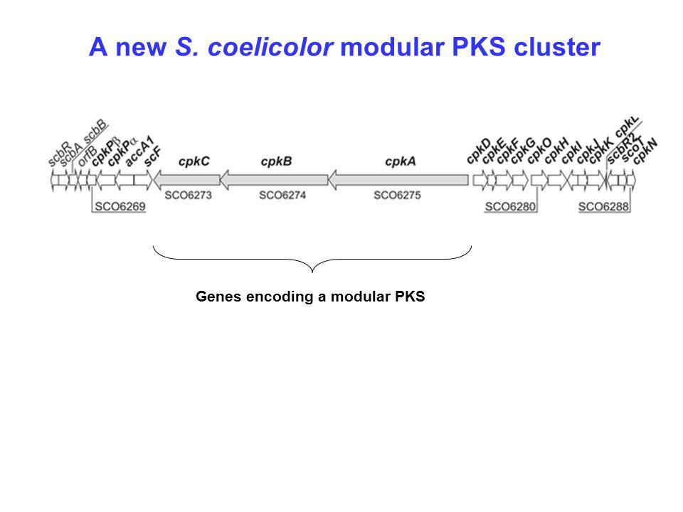 A new S. coelicolor modular PKS cluster Genes encoding a modular PKS
