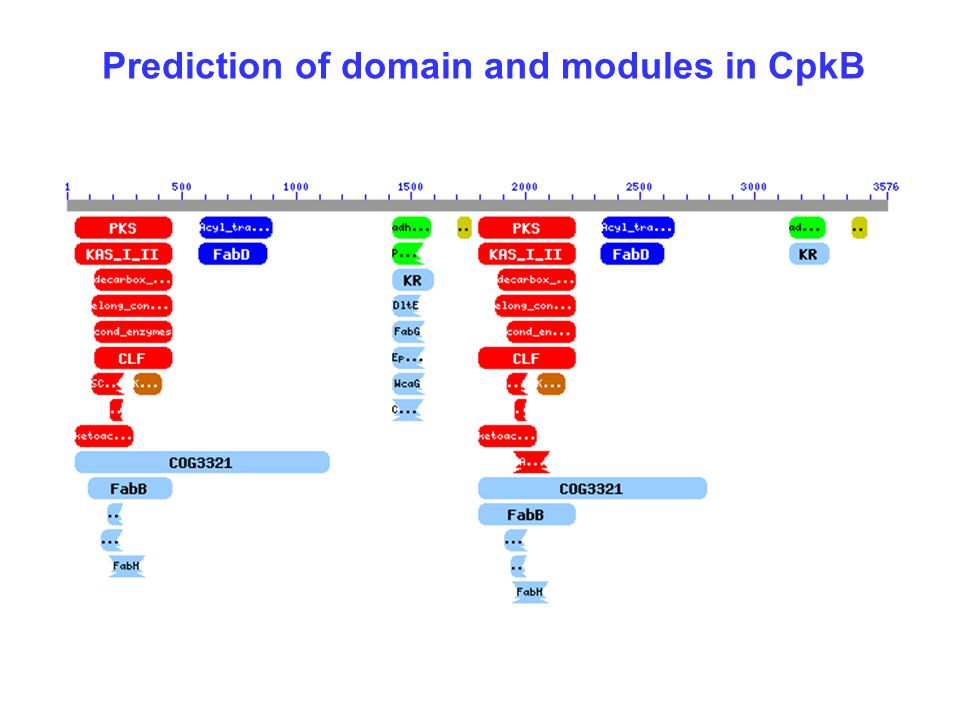 Prediction of domain and modules in CpkB
