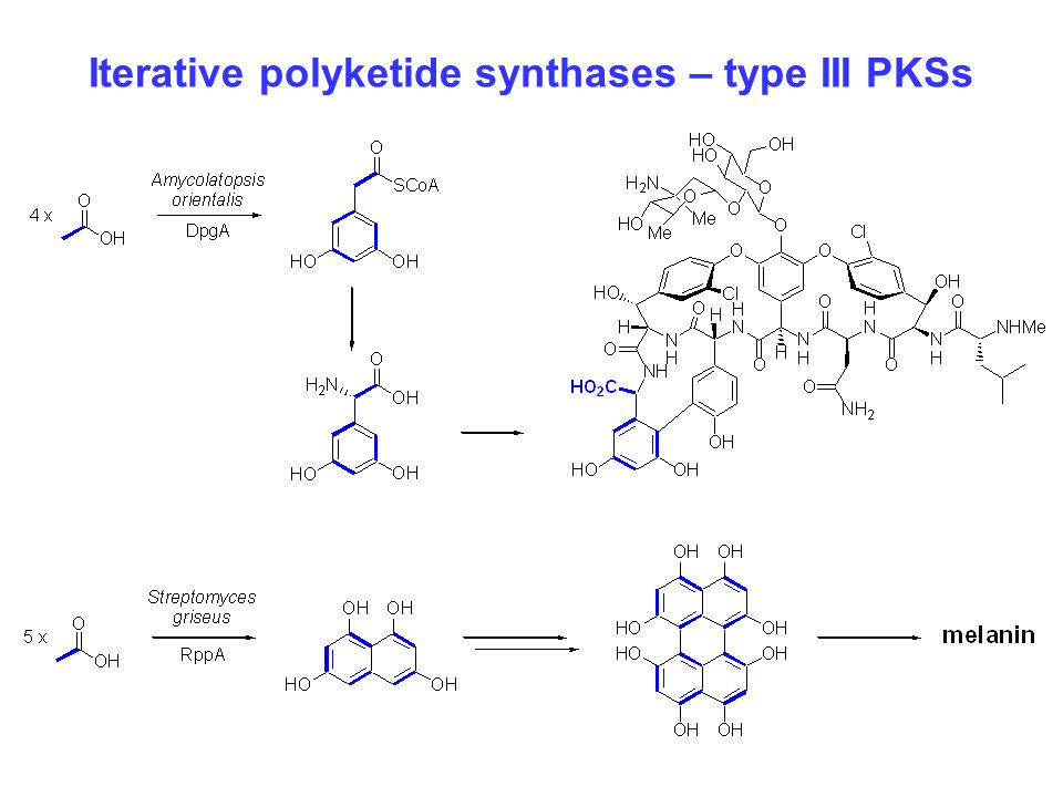 Iterative polyketide synthases – type III PKSs