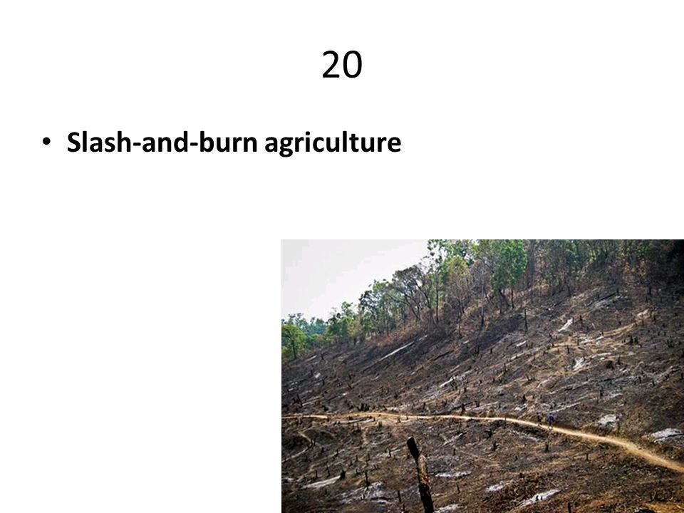 20 Slash-and-burn agriculture