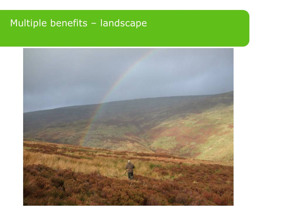 Multiple benefits – landscape