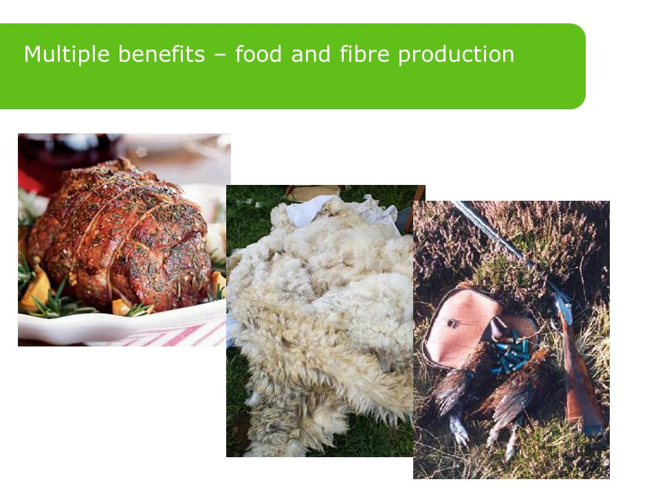 Multiple benefits – food and fibre production