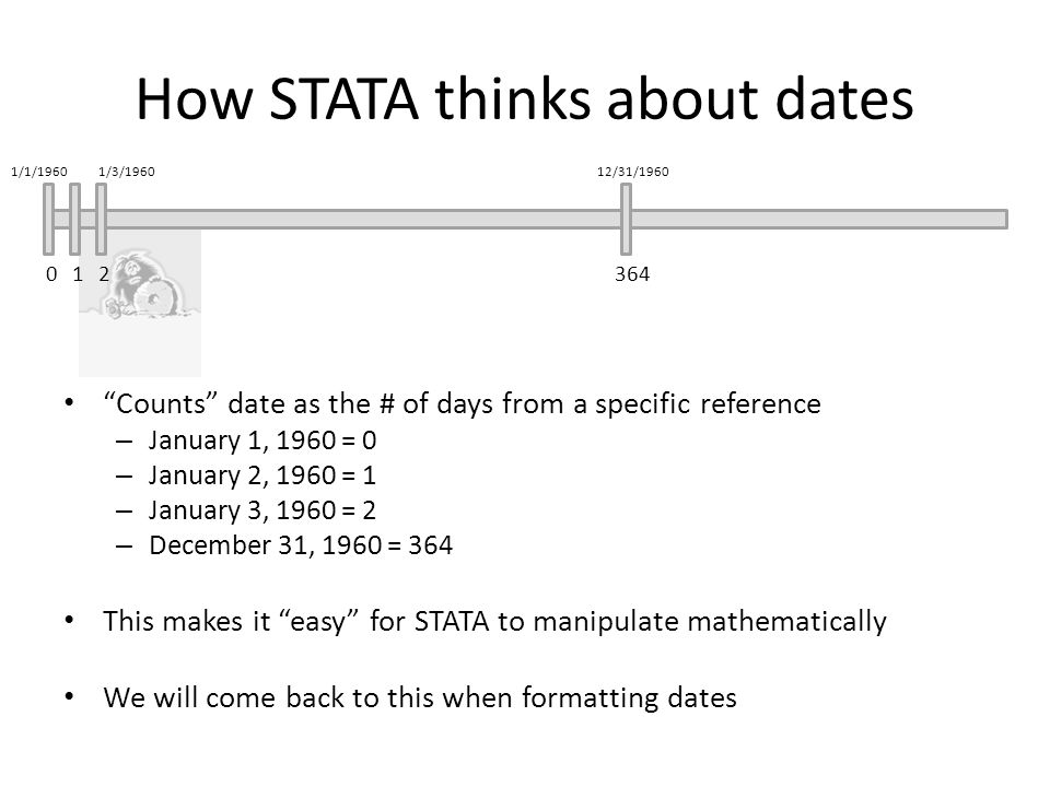 How STATA thinks about dates Counts date as the # of days from a specific reference – January 1, 1960 = 0 – January 2, 1960 = 1 – January 3, 1960 = 2 – December 31, 1960 = 364 This makes it easy for STATA to manipulate mathematically We will come back to this when formatting dates 012364 1/1/19601/3/196012/31/1960