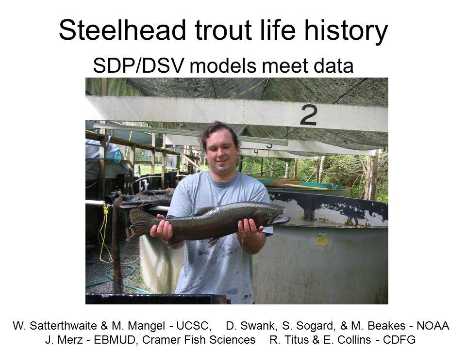 Steelhead trout life history SDP/DSV models meet data W.