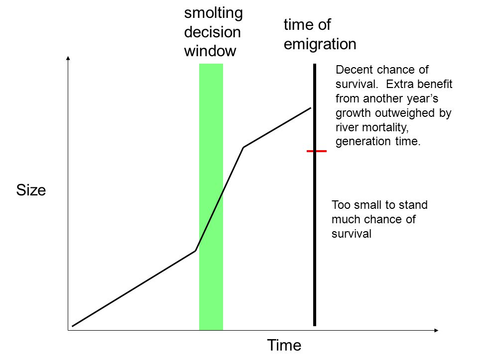 Time Size Too small to stand much chance of survival smolting decision window time of emigration Decent chance of survival. Extra benefit from another