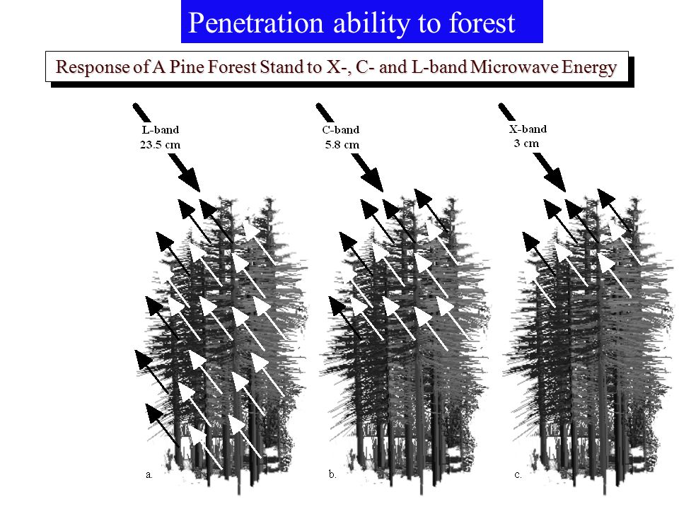 Response of A Pine Forest Stand to X-, C- and L-band Microwave Energy Penetration ability to forest