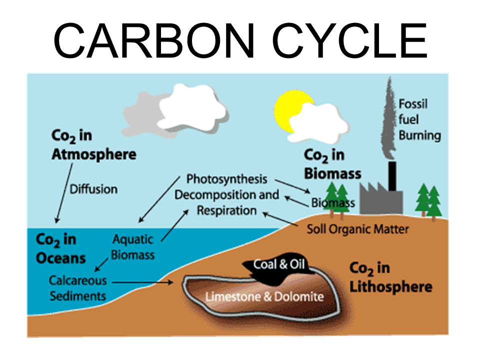 THE CARBON CYCLE The carbon cycle is just one of several recycling processes, but it may be the most important process since carbon is the basic building block of life.