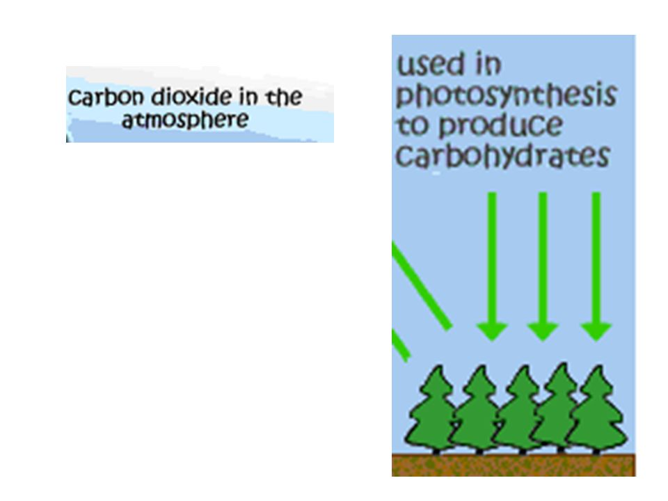 Respiration CARBOHYDRATE + OXYGEN Makes CARBON DIOXIDE + OXYGEN