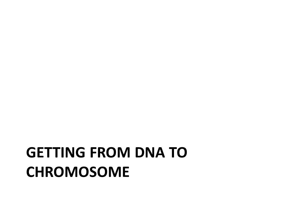 GETTING FROM DNA TO CHROMOSOME